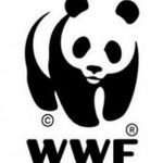 A Brief Explanation of WWF You Need to Know