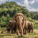 Various Wildlife Conservation Efforts in Thailand